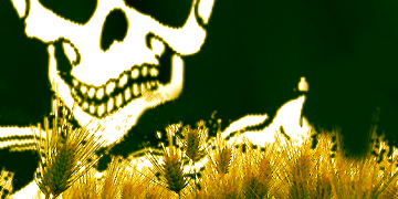 Piratas y trigo